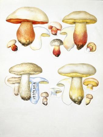 https://imgc.allpostersimages.com/img/posters/mushrooms_u-L-PW2S4B0.jpg?p=0