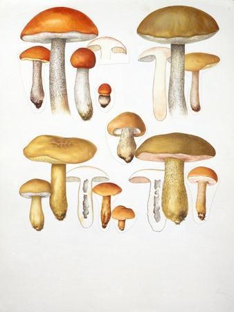 https://imgc.allpostersimages.com/img/posters/mushrooms_u-L-PW2S5H0.jpg?p=0