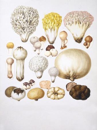 https://imgc.allpostersimages.com/img/posters/mushrooms_u-L-PW2T020.jpg?p=0