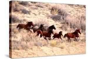 Mustang Horses Running, Wyoming