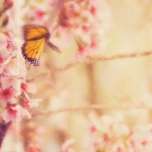 Delicate Butterly and Flowers by Myan Soffia
