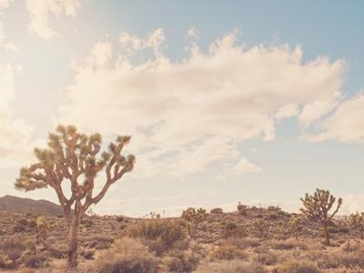 Sunshine & Joshua Trees by Myan Soffia