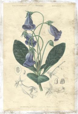Floral Botanique I by N.Charles D'Orbigny