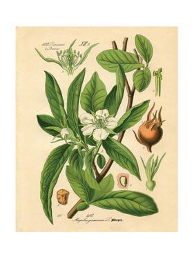 Botanical I by N. Harbick