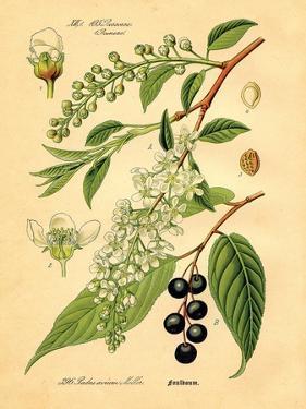 Botanical IV by N. Harbick