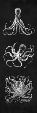 Octopi Study by N. Harbick