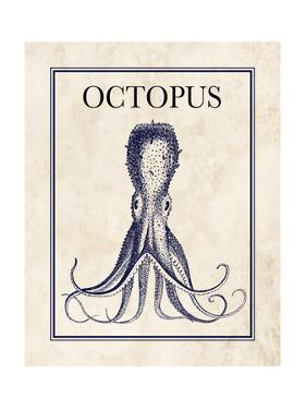 Octopus by N. Harbick