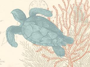 Sea Turtle by N. Harbick