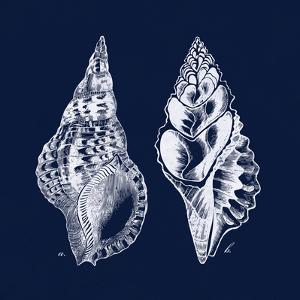 Shell Negative I by N^ Harbick