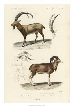Antique Antelope & Ram Study by N. Remond