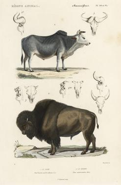 Antique Cow & Bison Study by N. Remond