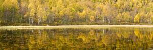 Autumn Reflections, Cairngorms National Park, Highlands, Scotland, UK by Nadia Isakova