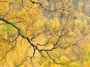 Autumn Wood, Cairngorms National Park, Highlands, Scotland, UK by Nadia Isakova