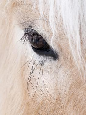 Close-Up of a Horse?S Eye, Lapland, Finland by Nadia Isakova