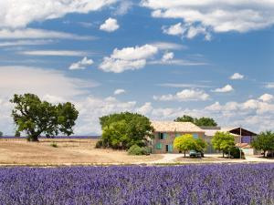 Farmhouse in a Lavender Field, Provence, France by Nadia Isakova