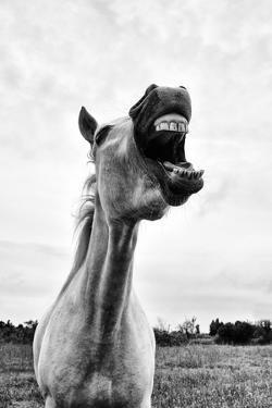 Grinning Horse, Camargue, France by Nadia Isakova
