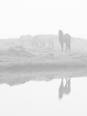 Herd of Horses in the Mist, Iceland by Nadia Isakova