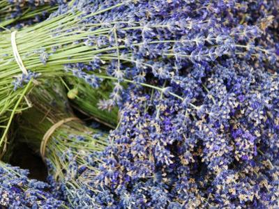 Lavender Bundles for Sale in Roussillon, Sault, Provence, France by Nadia Isakova
