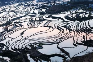 Rice Terraces in Yuanyang, Yunnan, China by Nadia Isakova