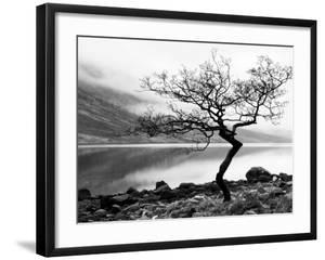 Solitary Tree on the Shore of Loch Etive, Highlands, Scotland, UK by Nadia Isakova
