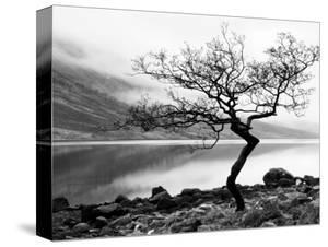 Solitary Tree on the Shore of Loch Etive, Highlands, Scotland, UK by Nadia Isakova
