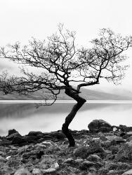 Affordable Trees Bw Photography Posters For Sale At Allposterscom