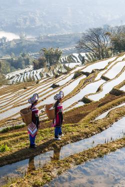 Young Women of the Hani Ethnic Minority Walking in the Rice Terraces, Yuanyang, Yunnan, China by Nadia Isakova