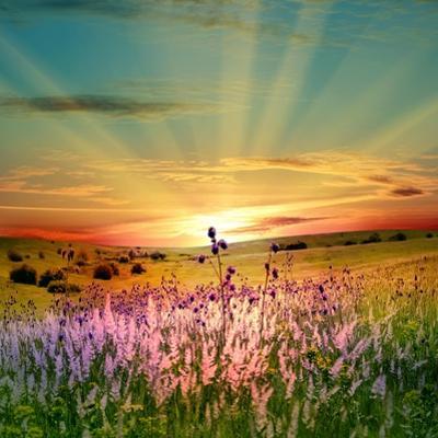 Sunset Is In The Field by nadiya_sergey