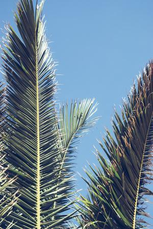 palm fronds in front of glorious blue sky,
