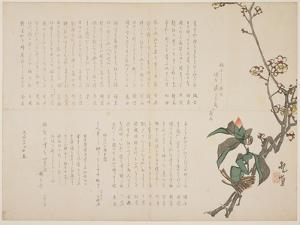 Plum and Camellia Branches, 1829 by Nagayama K?choku