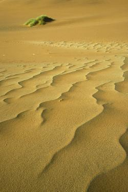 Namibia Structural Forms in the Sand of the Namib