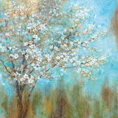 Cherry Blossoms by Nan