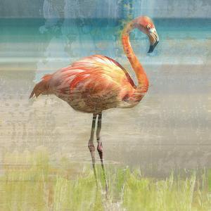 Flamingo Fancy I by Nan