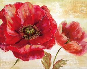 Passion for Poppies I by Nan