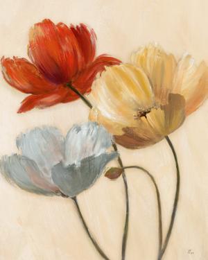 Poppy Palette II by Nan