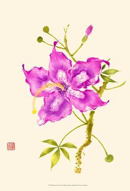 Hibiscus Flower I by Nan Rae