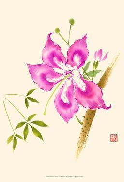 Hibiscus Flower II by Nan Rae