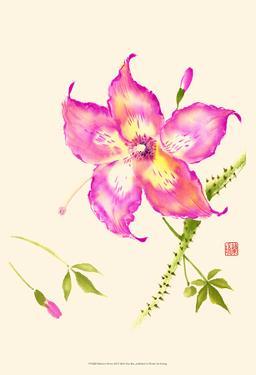 Hibiscus Flower III by Nan Rae