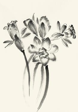 Ink Wash Floral I - Daffodils by Nan Rae