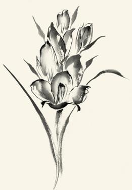 Ink Wash Floral II - Gladiolus by Nan Rae