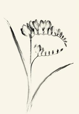 Ink Wash Floral VI - Freesia by Nan Rae