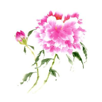 Peonies in Pink II