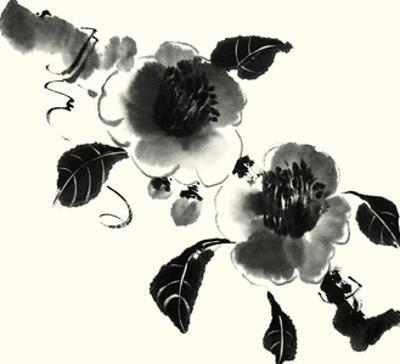 Studies in Ink - Camellia