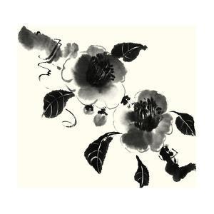 Studies in Ink - Camellia by Nan Rae