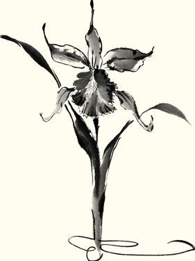Studies in Ink - Cattleya by Nan Rae