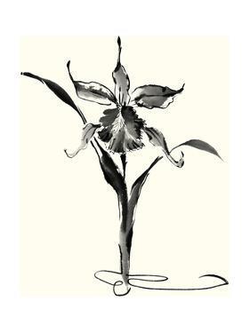 Studies in Ink - Cattleya by Nan Rae