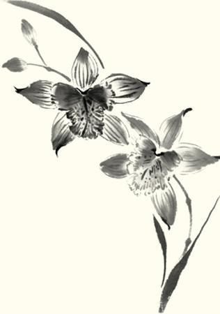 Studies in Ink - Cymbidium by Nan Rae