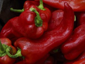 Bright Red Peppers at Farmers Market, Portland, Maine by Nance Trueworthy