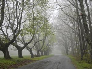 Misty Road in Early Springtime, Cape Elizabeth, Maine by Nance Trueworthy