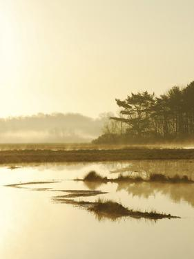 Quiet Moments Overlooking the Marsh at Dawn, Scarborough,Maine by Nance Trueworthy